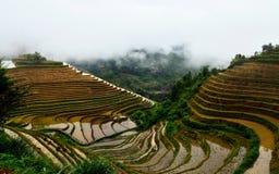 Terassenförmig angelegte Reisfelder Jinkeng in Longshan, Guilin Stockbilder