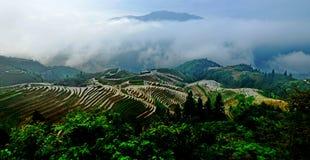 Terassenförmig angelegte Reisweidelandschaft stockfoto