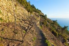 Terassenförmig angelegte Weinberge im Winter auf der Ligurier Küste stockfoto