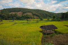 Terassenförmig angelegter Reis auf Berg, Chiangmai Thailand Stockfotografie