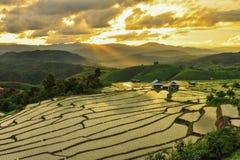 Terassenförmig angelegter Reis und Landschaft Chiang Mai Lizenzfreie Stockbilder