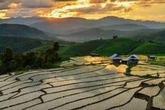 Terassenförmig angelegter Reis und Landschaft Chiang Mai Lizenzfreies Stockfoto