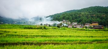 Terassenförmig angelegtes Ackerland mit Reisfeld in Bhutan Lizenzfreies Stockbild