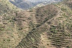 Terassenförmig angelegtes Ackerland in Ost-Äthiopien Stockfotos