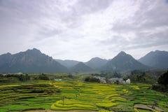 Terassenförmig angelegtes Feld stockfotos