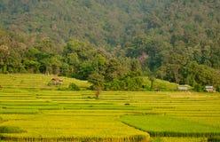 Terassenförmig angelegtes Reis-Feld Stockbild