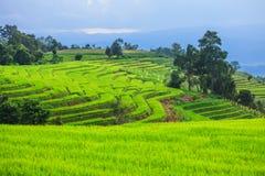 Terassenförmig angelegtes Reis-Feld Stockfoto