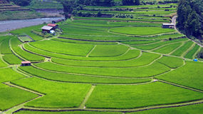 Terassenförmig angelegtes Reis-Feld Aragijima in Wakayama, Japan Lizenzfreie Stockfotos