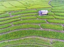Terassenförmig angelegtes Reis-Feld im Hügel Lizenzfreies Stockfoto