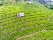 Terassenförmig angelegtes Reis-Feld im Hügel Lizenzfreies Stockbild