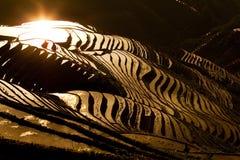 Terassenförmig angelegtes Reisfeld Lizenzfreie Stockbilder