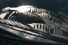 Terassenförmig angelegtes Reisfeld Stockbild