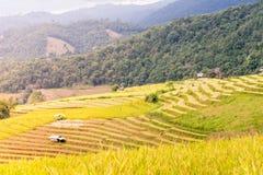 Terassenförmig angelegtes Reisfeld am Abend Lizenzfreie Stockbilder