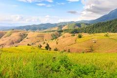 Terassenförmig angelegtes Reisfeld am Abend Lizenzfreie Stockfotografie