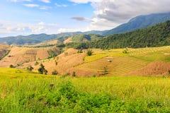 Terassenförmig angelegtes Reisfeld am Abend Stockbilder