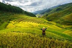Terassenförmig angelegtes Reisfeld in der Erntezeit mit Frau der ethnischen Minderheit auf Feld in MU Cang Chai, Vietnam lizenzfreies stockfoto