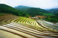 Terassenförmig angelegtes Reisfeld in der Wasserjahreszeit, die Zeit, vor dem Beginnen, bauen Reis in Y Ty, Lao Cai-Provinz, Viet lizenzfreie stockbilder