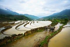 Terassenförmig angelegtes Reisfeld in der Wasserjahreszeit, die Zeit, vor dem Beginnen, bauen Reis in Y Ty, Lao Cai-Provinz, Viet stockbilder