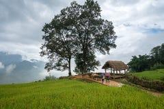 Terassenförmig angelegtes Reisfeld mit großer Baumlandschaft von Y Ty, Schläger Xat-Bezirk, Lao Cai, Nord-Vietnam Lizenzfreie Stockfotografie