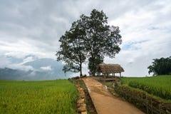 Terassenförmig angelegtes Reisfeld mit großer Baumlandschaft von Y Ty, Schläger Xat-Bezirk, Lao Cai, Nord-Vietnam Lizenzfreie Stockfotos