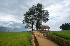Terassenförmig angelegtes Reisfeld mit großer Baumlandschaft von Y Ty, Schläger Xat-Bezirk, Lao Cai, Nord-Vietnam Stockbild
