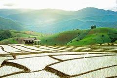Terassenförmig angelegtes Reisfeld in Thailand Lizenzfreies Stockbild