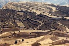 Terassenförmig angelegte Felder Lizenzfreie Stockfotos