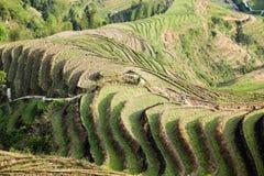 Terassenförmig angelegte Feldlandschaft Stockbild