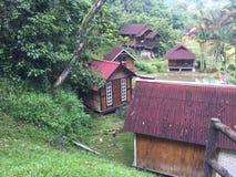 Terata Malaya, Janda Baik, Bentong, Malaysia Arkivfoto