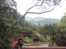 Terata Malaya, Janda Baik, Bentong, Malaysia Fotografering för Bildbyråer