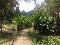 Terata Malaya, Janda Baik, Bentong, Malaysia stockfoto