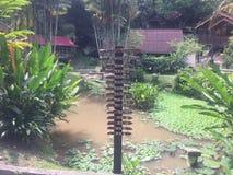 Terata Malaya, Janda Baik, Bentong, Malaysia Arkivfoton