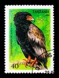 Terathopius Ecaudatus, pássaros do serie da rapina, cerca de 1994 Foto de Stock Royalty Free