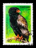 Terathopius Ecaudatus, Roofvogels serie, circa 1994 Royalty-vrije Stock Foto