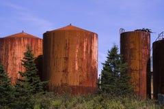 Tercer bosque del crecimiento en Nueva Escocia Imagen de archivo libre de regalías