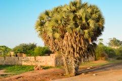 Tercet drzewka palmowe na drodze Zdjęcie Stock