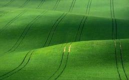 Terciopelo verde Rolling Hills verdes del trigo que se asemejan a la pana con las líneas el estirar en la distancia Foto de archivo libre de regalías