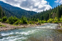 Tereblya river of Carpathan mountains. Beautiful springtime scenery in rural part of Synevir National park Royalty Free Stock Images