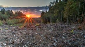 Teren Wylesiający Dla linii energetycznych obraz royalty free