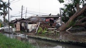 teren zalewał wykorzeniającego burzy drzewa zdjęcie stock