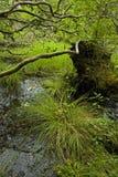 terenu łóżek lasu nf różowy pisgah obraz royalty free