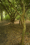 terenu łóżek lasu nf różowy pisgah obraz stock