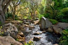 terenu bieg strumień lesisty Zdjęcie Royalty Free