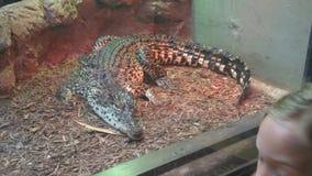terenu duży krokodyla wielki Thailand zoo Fotografia Stock