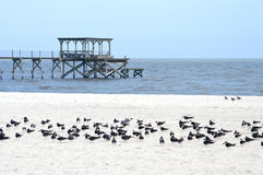 terenu plaży wybrzeża zatoka Mexico Mississippi Obraz Royalty Free