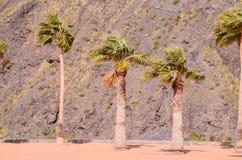Teresitas Beach in Tenerife Royalty Free Stock Photography