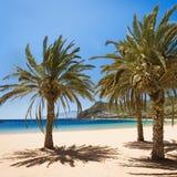 Teresitas för palmträdPlaya las strand, Tenerife Arkivbild