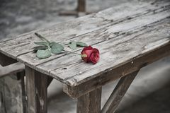 The Terezin Fortress, a flower on the table where, a few years ago, it was terrible. stock photo