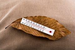 Termómetro colocado en una hoja seca marrón Imagenes de archivo