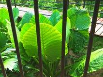 Ornamental plant in the garden stock photos
